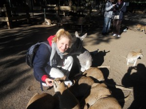 ICMS - Kangaroo Feeding