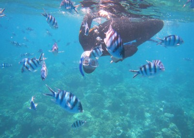 ICMS – Great Barrier Reef